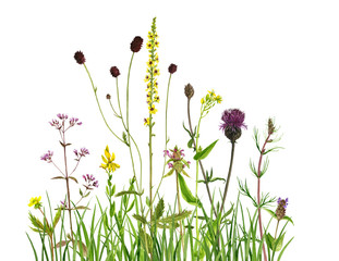 watercolor drawing flowers and grass