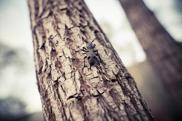 Weaver beetle on a tree