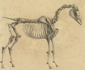 Horse Anatomy Print