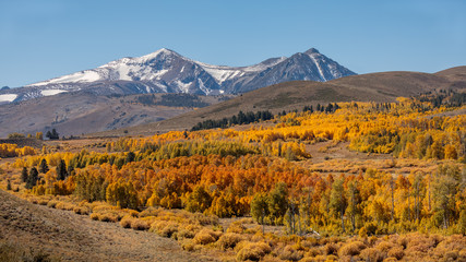 Fall Colors on Conway Summit