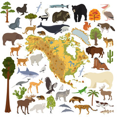 North America flora and fauna map, flat elements. Animals, birds and sea life big set. Build your geography infographics collection
