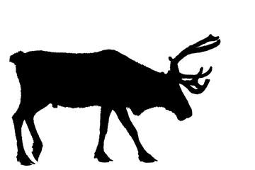 deer black on white