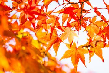 河口湖の秋風景2017