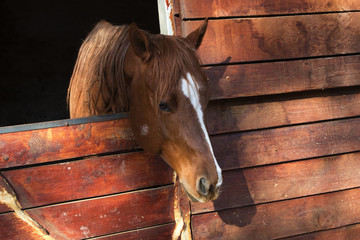 Brown horse in a wooden stable