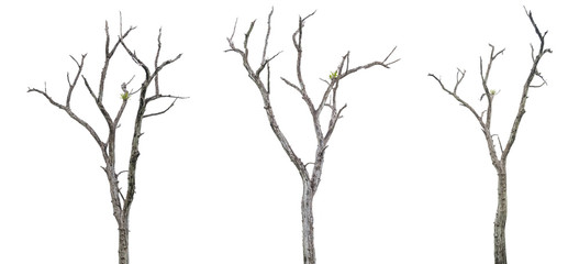 Set of dead trees on white background with clipping path.