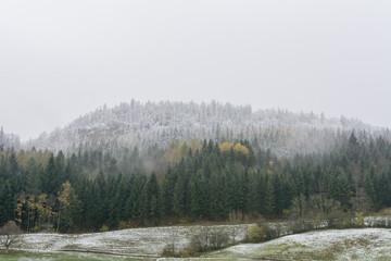 Leichter Schnee im Wald im Winter