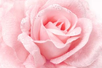 rose fabric pink texture
