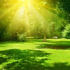 Bright sunny day in park. The sun rays illuminate green grass