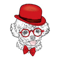 Poodle in a hat and glasses. Vector illustration. Clothes and accessories. Fashion & Style.