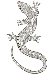 Lizard coloring raster for adults