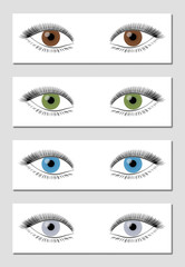 Eye color chart in dominant order of occurrence - brown, green, blue and gray - isolated vector illustration on white background.