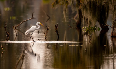 Great Egret with Fish Fotomurales