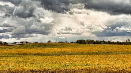 Soybean field in the fall