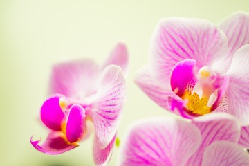 Door stickers Orchid orchidee traum