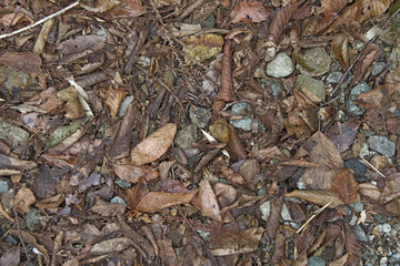 森 地面 地表 素材 背景素材