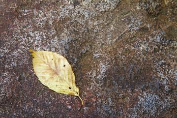 葉っぱ 落ち葉 素材 背景素材