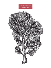 Vector illustration of hand drawn reef coral. Vintage set underwater natural elements. Vintage sealife sketch.