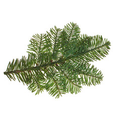 Evergreen Christmas Tree Twig Isolated on White Background. Green Fir on White