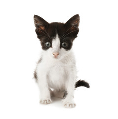 Cute funny baby kitten on white background