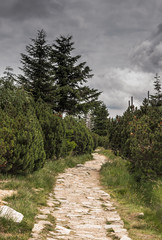 widok na szrenicę, Giant Mountains, Krkonoše, Riesengebirge, Karkonosze