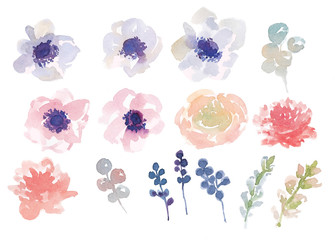Floral set of elements: anemones, carnations, branches of berries. Watercolor illustration