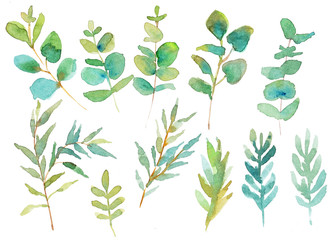 Different eucalyptus branches. Watercolor illustration