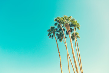 retro california palms Wall mural