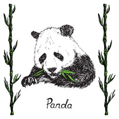 Giant panda eating green bamboo leaves, bamboo twigs frame, hand drawn doodle sketch with inscription, vector illustration