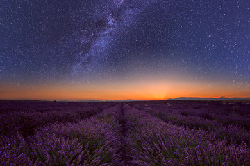 Lavender field at night in Provence, amazing landscape with starry sky, milky way and glow of sunrise, France