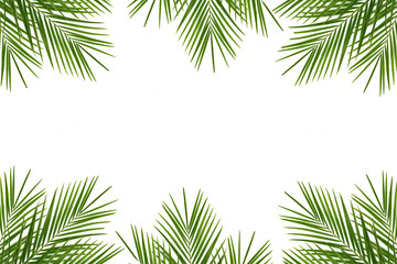 Tropical palm leaf on a white background