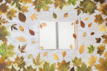 Autumn Frame Border Green Yellow Red Maple Leaves Woman Hands Hold Opened Notebook Pages with Pencil Pen Wooden Country Background Rustic Style Copy Space Flat Lay Top View