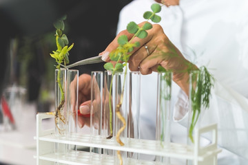 Doing tests on plants
