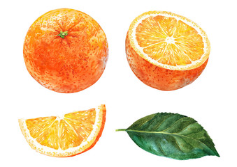Set of oranges. Watercolor.