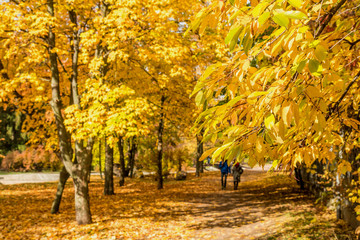 City park alley in autumn