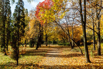 City park alley in golden autumn