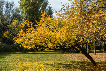 City park in golden autumn