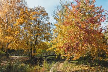 City park footpath in golden autumn