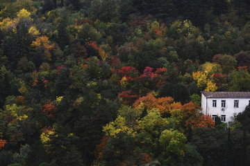 White house in autumn forest