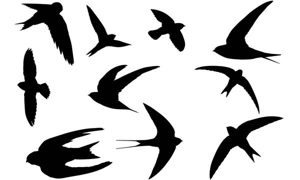 Swift Silhouette Vector Graphics