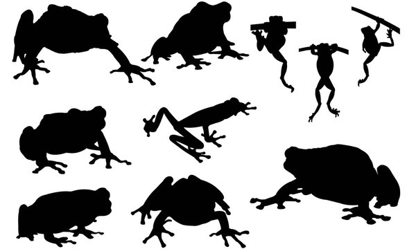 Tree frog Silhouette Vector Graphics