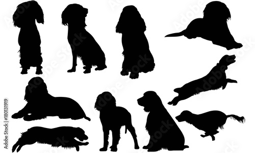 english springer spaniel silhouette vector graphics