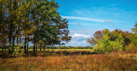 Autumn landscape background. Through the trees oaks blue sky and field are visible