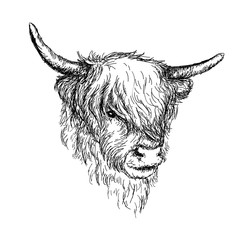 "Illustration of beautiful Scottish rural animal - Hairy Cow (""Hairy Coo"") from Highlands VECTOR"