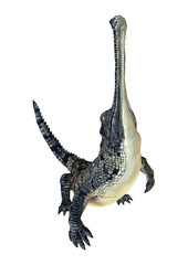 3D Rendering Gharial Crocodile on White