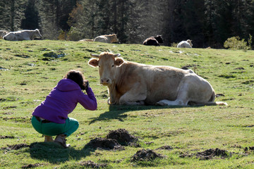 woman photographing a cow in french Pyrenees