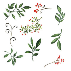 Set of fresh green leaves, dry branches with red berries on white background. Hand drawn watercolor illustration.
