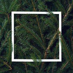 Frame of Christmas tree branches