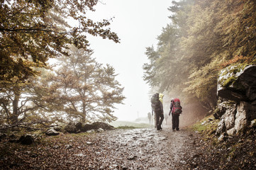 Group hiking along forest path