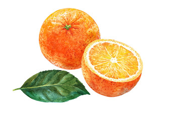 Fruit and half of oranges. Watercolor.