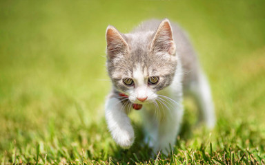 Baby kitten on the green grass